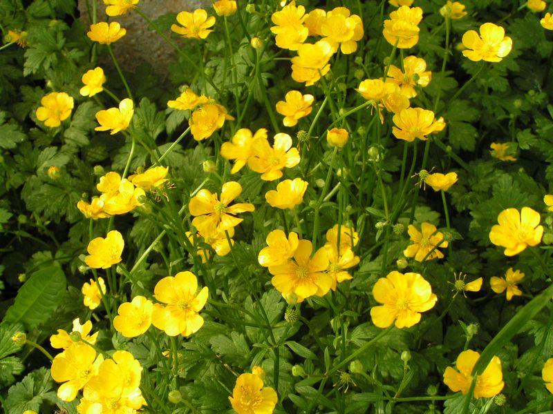 Spring10 348