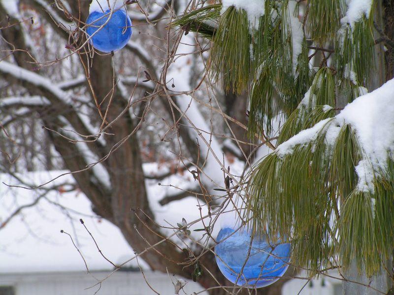Garden Dec 2010